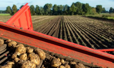 Aardappel Oogst 1400