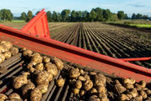Aardappel Oogst 700x 255